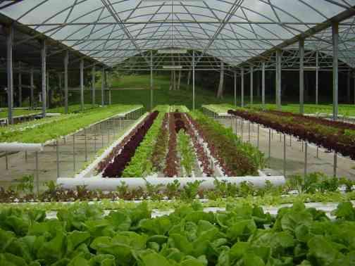 Hydroponics Gardening By Delia Muntean